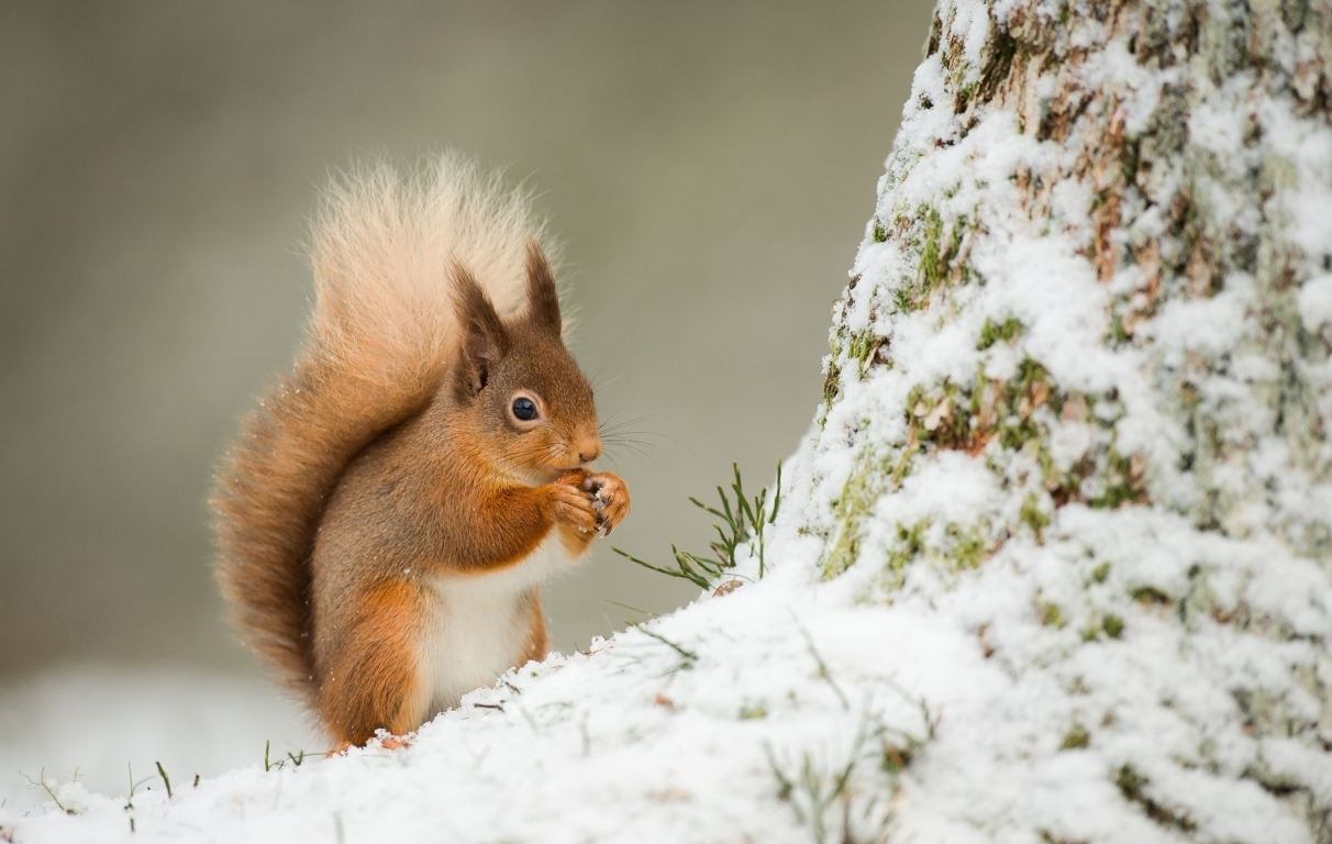Adorable Squirrel In Tree Wallpaper iPhone Android