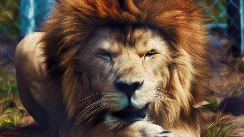 Amazing Roaring Lion Wallpaper Animals And Birds Wallpaper Hd