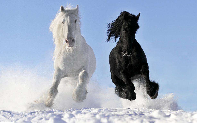 Animals Horse Full Screen Full Hd Horses Hd Wallpaper