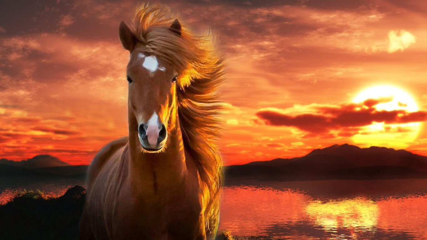 Best Of Horse Wallpaper For Android Hd Hd
