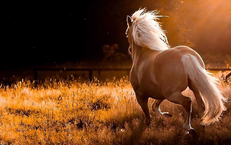 Black Horse 4K HD Desktop Wallpaper for 4K Ultra HD TV