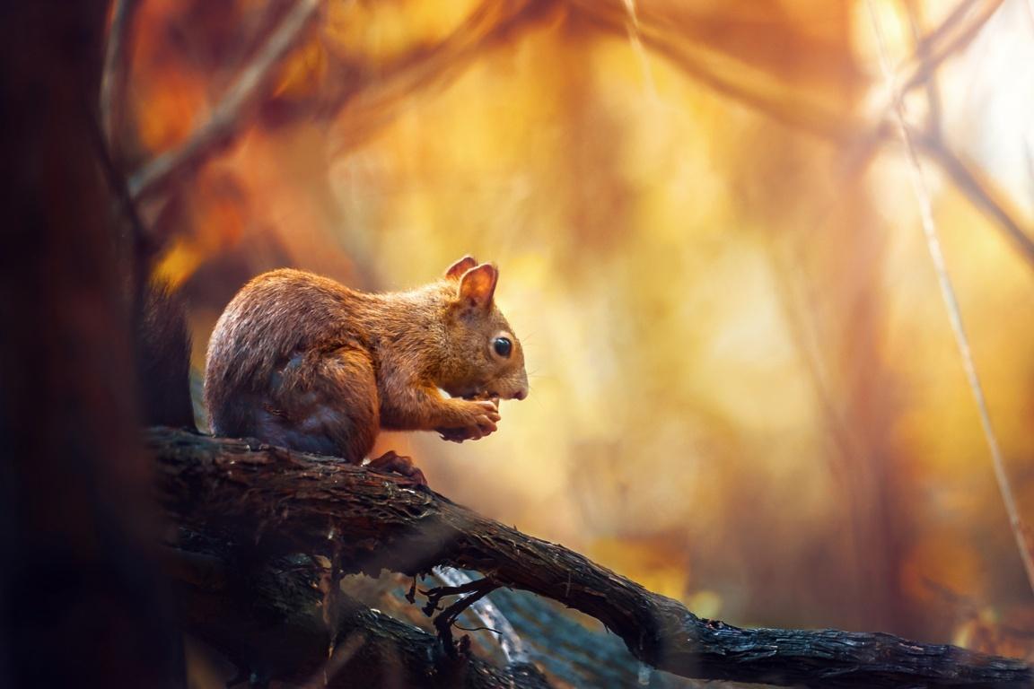 Charming Squirrel 5K Wallpaper