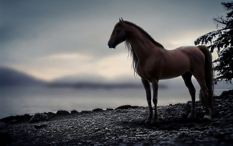 Cute Horse Wallpaper Hd