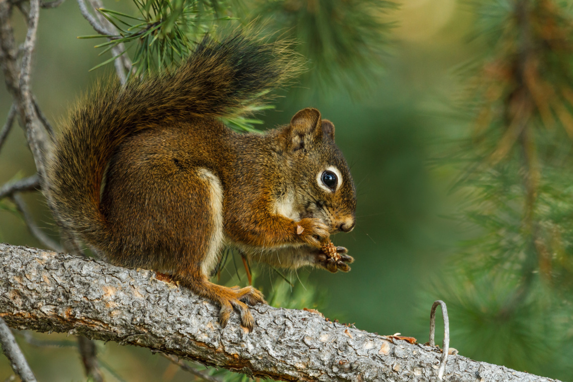 Cute Wallpaper Squirrel Wallpaper Wild Game Cute Alabama