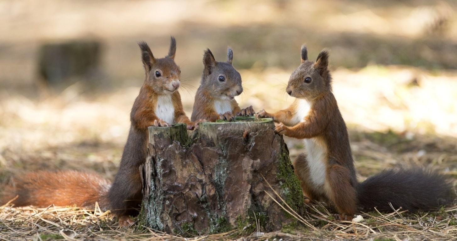 Ewallpaper brings Squirrel Desktop Wallpaper
