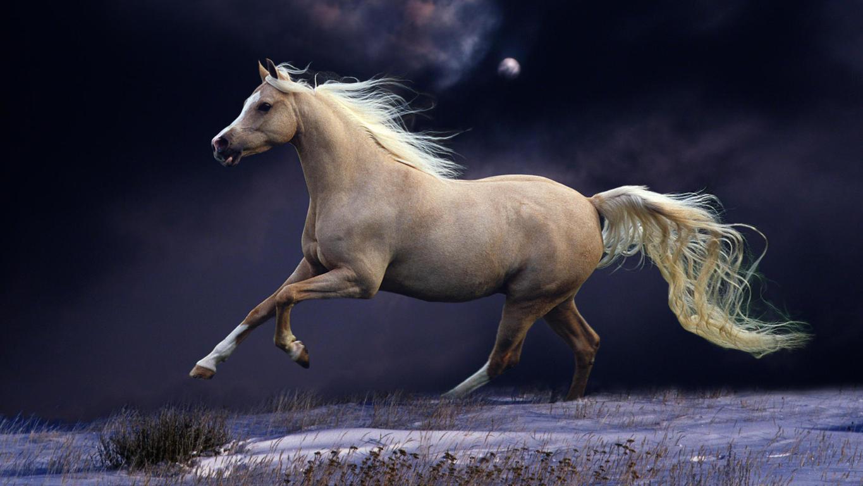 Fall Horse Wallpaper