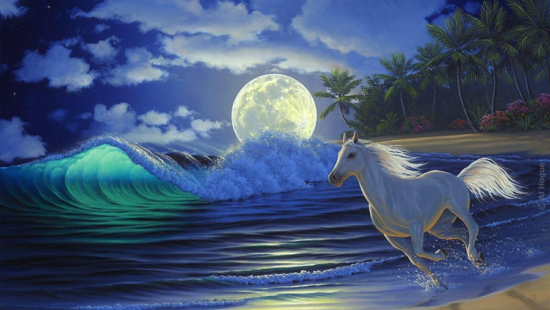 Fantasy Horse Wallpaper Hd Horse In Wild Hd Lipizzan