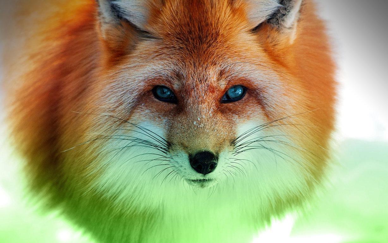 Fox Wallpaper Wallpaper Studio Tens Of Thousands Hd 10