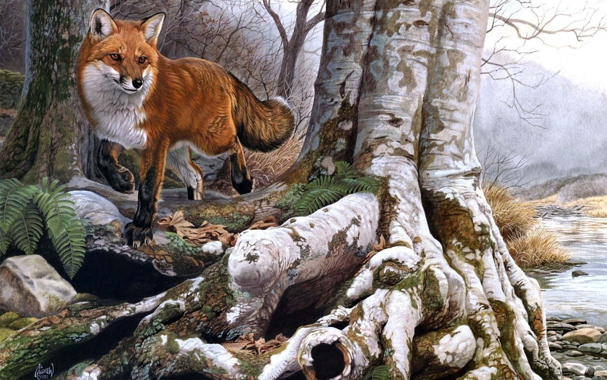 Foxes Image Red Fox Wallpaper And Background Photo Hd
