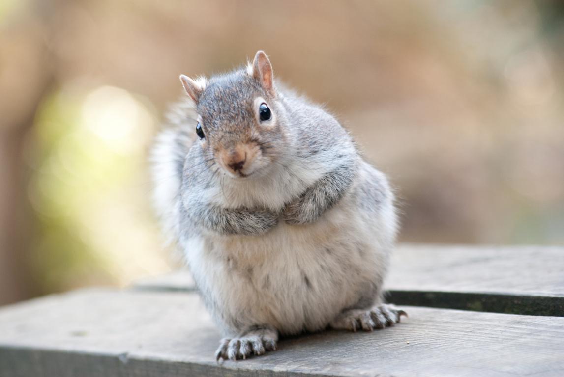 Free Squirrel Wallpaper High At Wildlife Monodomo Resolution