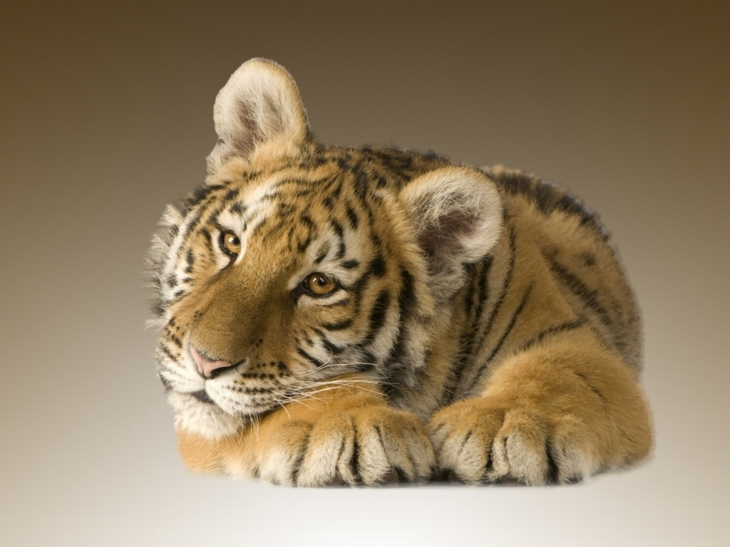 Free Tiger Wallpaper For iPhone