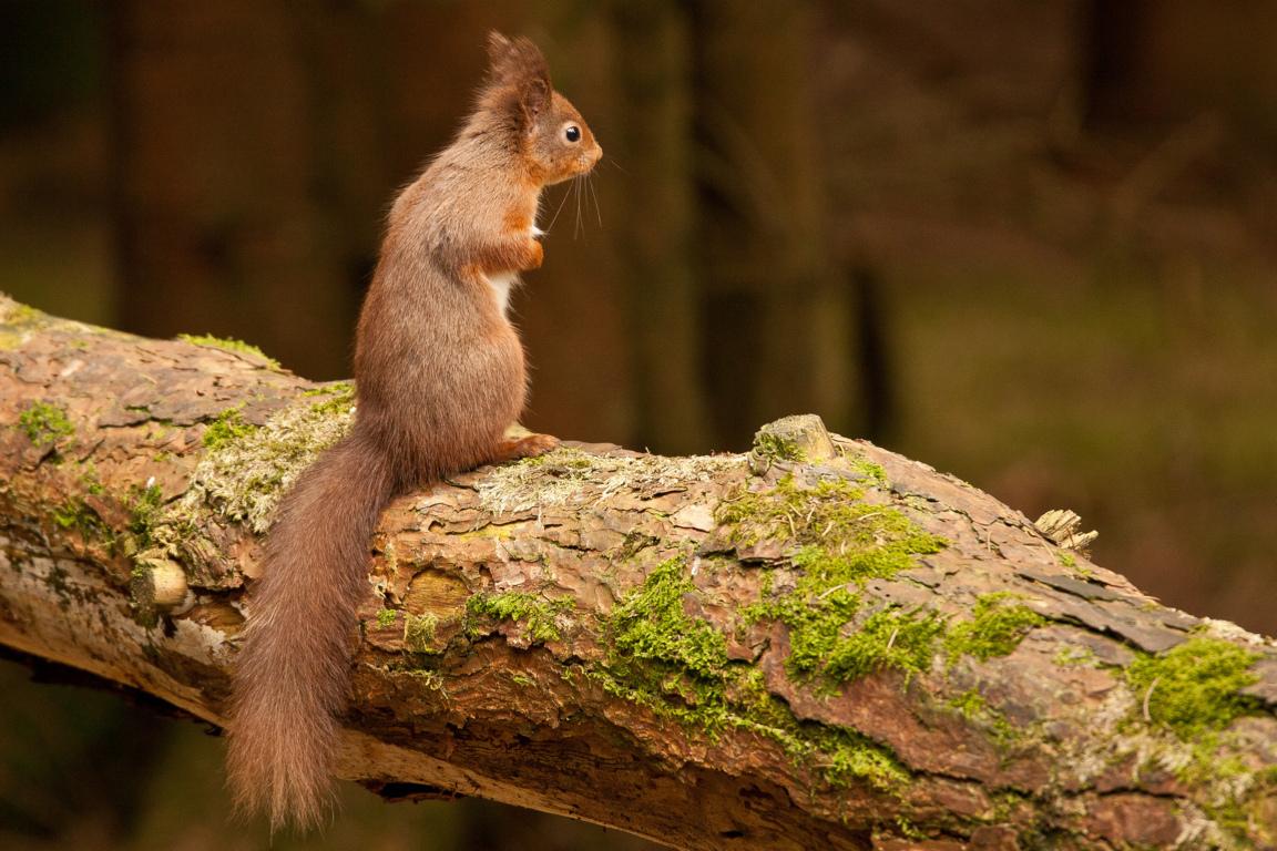 Funny Squirrels Wallpaper