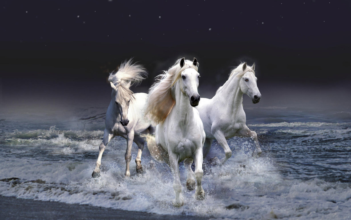 Horse HD Wallpaper and Background Image