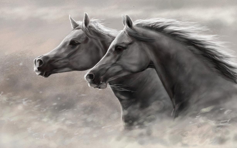 Horse Wallpaper Animal Spot