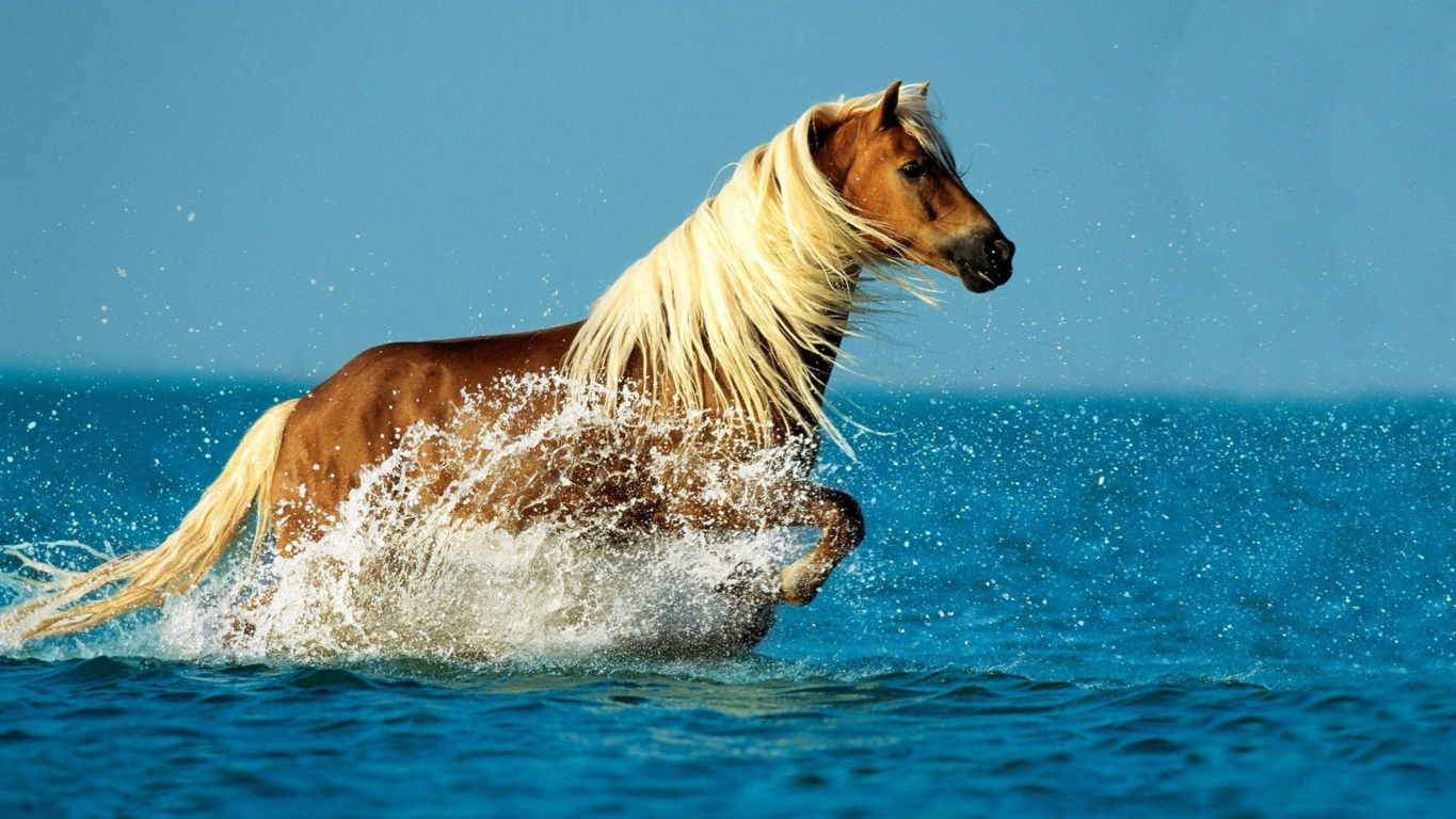 Horse Wallpaper For Computer Picture Hd Background