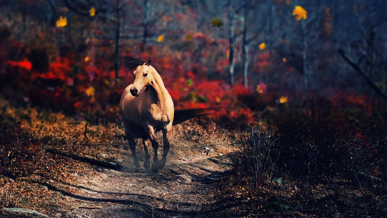 Horse Wallpaper HD