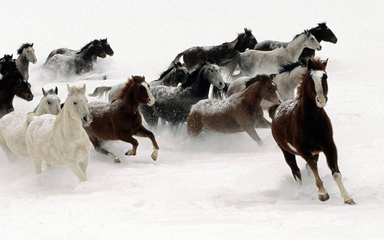 Horse Wallpaper Hd Horses Wallpaper Horse Desktop Hd