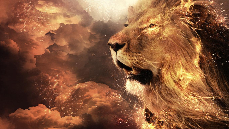 Lion Image HD 24