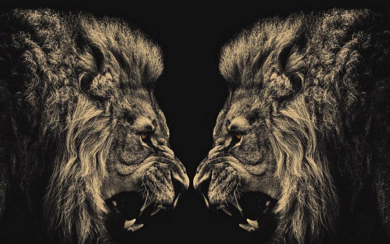 Lion Wallpaper Full Hd Wallpaper Earthly