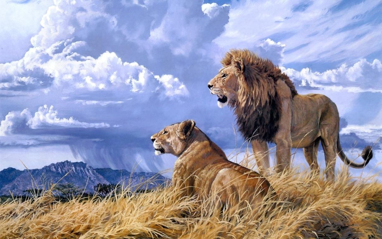 Lion Wallpaper Hd Free High Resolution Get Hd Wallpaper Free Download