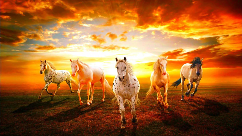 Morning Beach River Sunrise Horses Horse Dawn