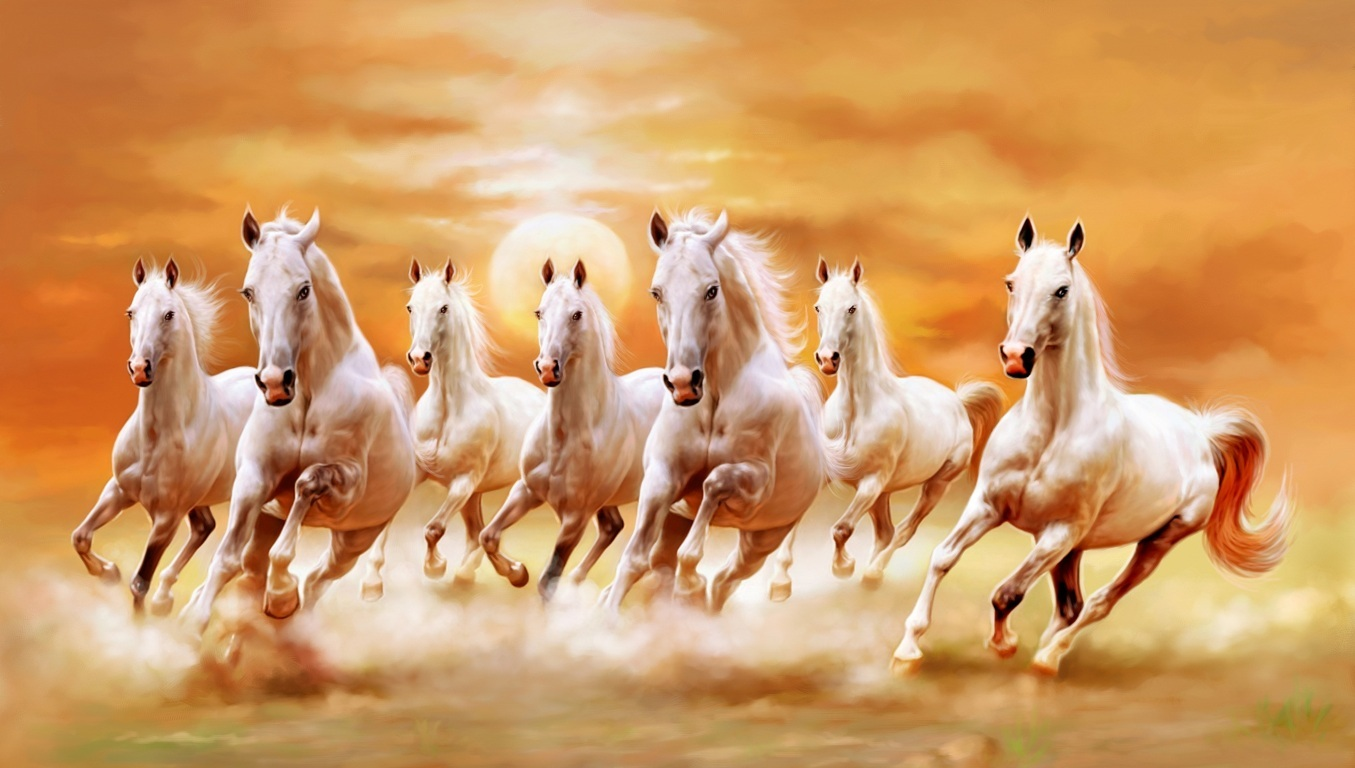 Morning Beach River Sunrise Horses Horse Hd Dawn