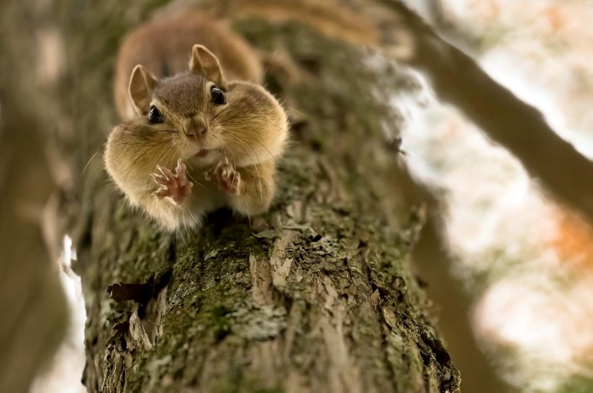 Pack Squirrel Wallpaper