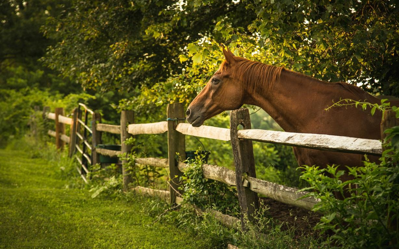 Seven Horse Wallpaper HD
