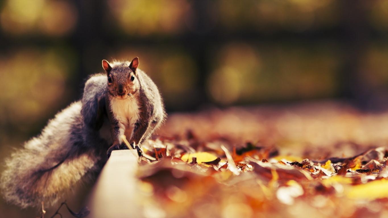 Squirrel 4k Hd Desktop For 4k Ultra Hd Tv Wide Wallpaper