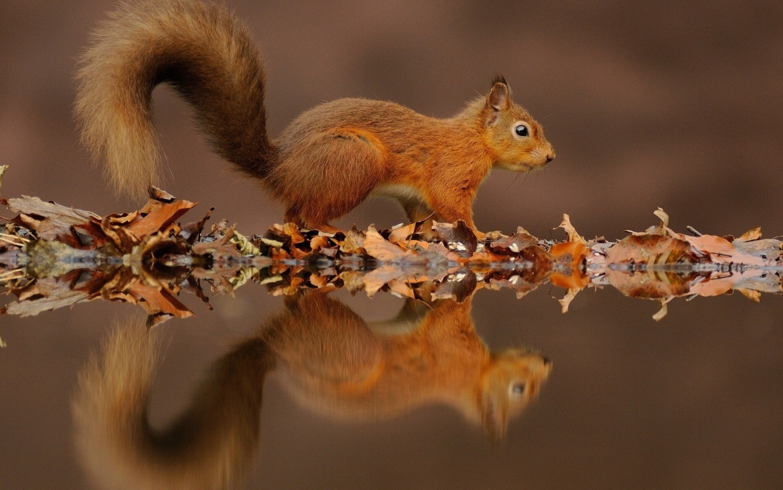 Squirrel Hd Animals 4k Image Background Photo Wallpaper