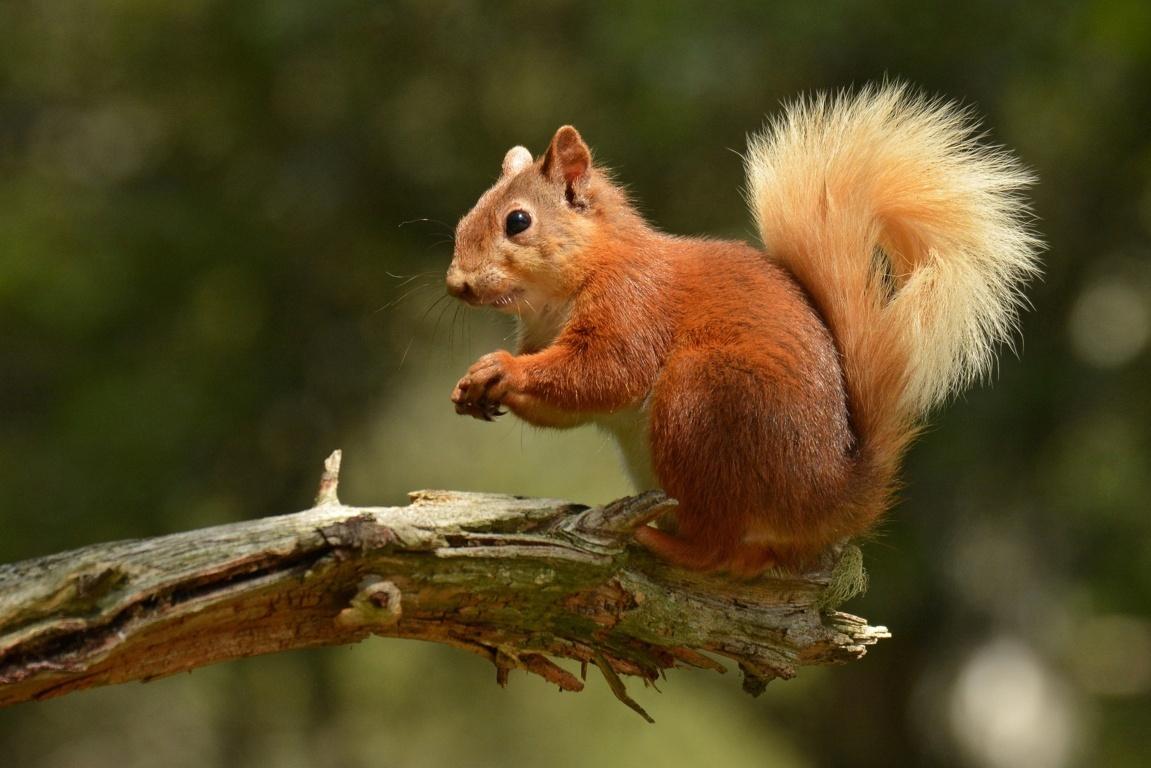 Squirrel Hd Animals 4k Image Background Wallpaper