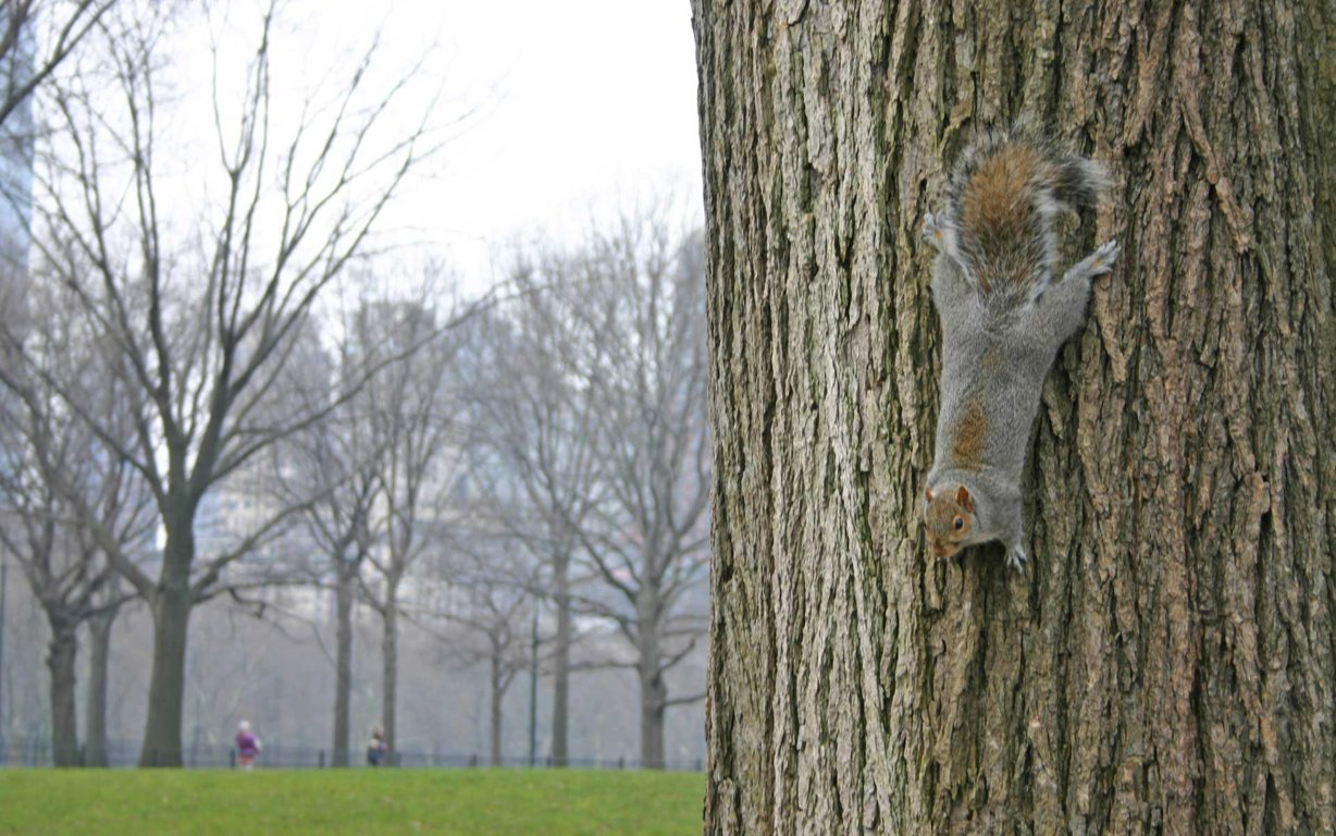 Squirrel Hd Wallpaper And Image Background