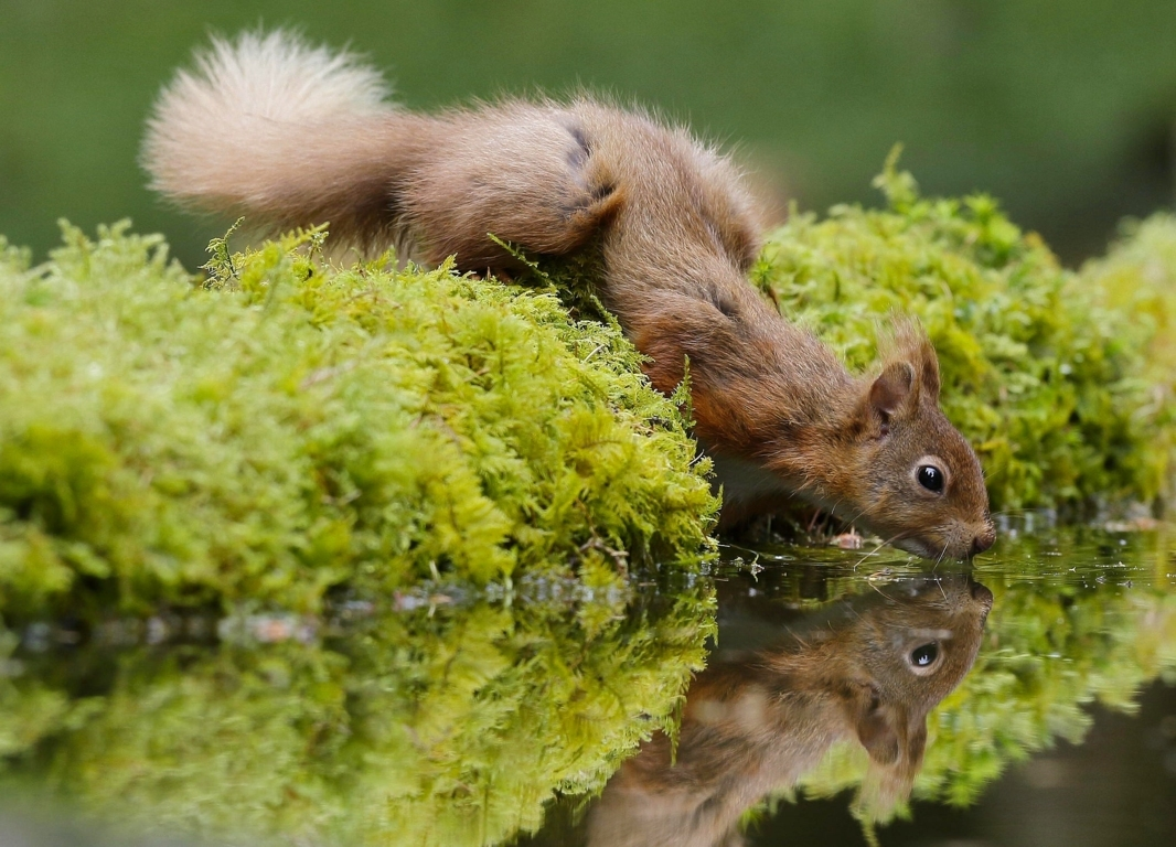 Squirrel Hd Wallpaper And Image Hd Background