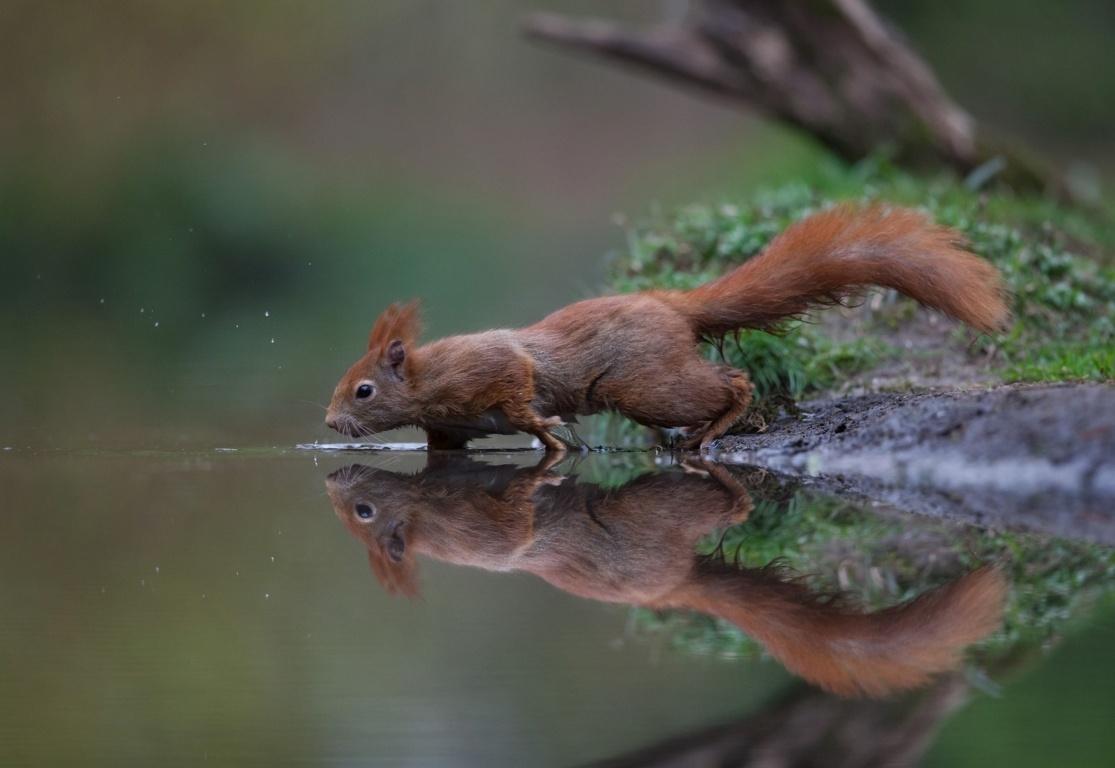 Squirrel Look HD Wallpaper