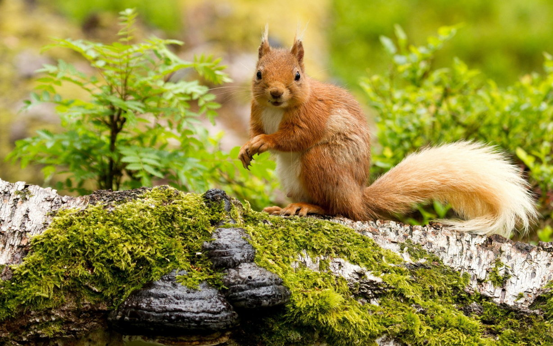 Squirrel Wallpaper Best Free Hd Wallpaper Desktop