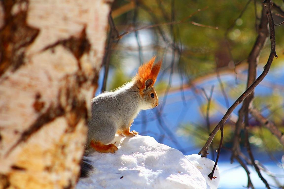 Squirrel Wallpaper Fun Animals Videos Picture Wiki