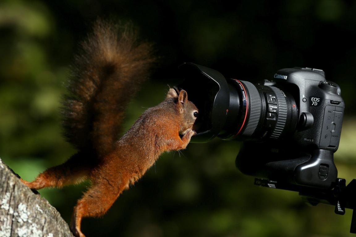 Squirrel Wallpaper HD