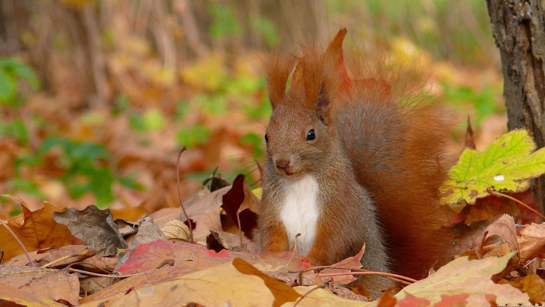 Squirrel Wallpaper High Quality