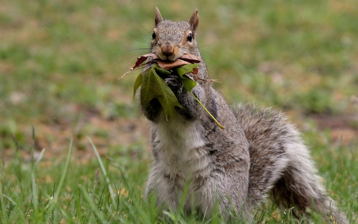 Squirrel Wallpaper Pets Cute Docile And