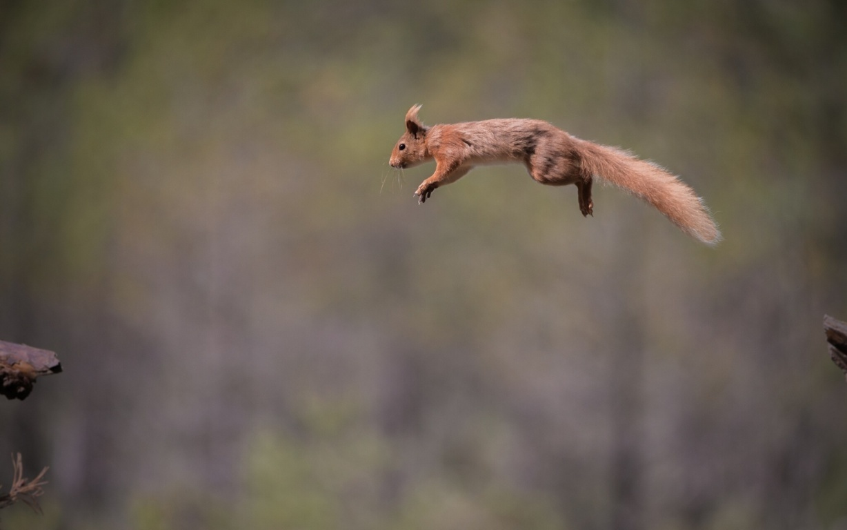 Squirrel Wallpaper Photos And Background For Mobile Up To Desktop