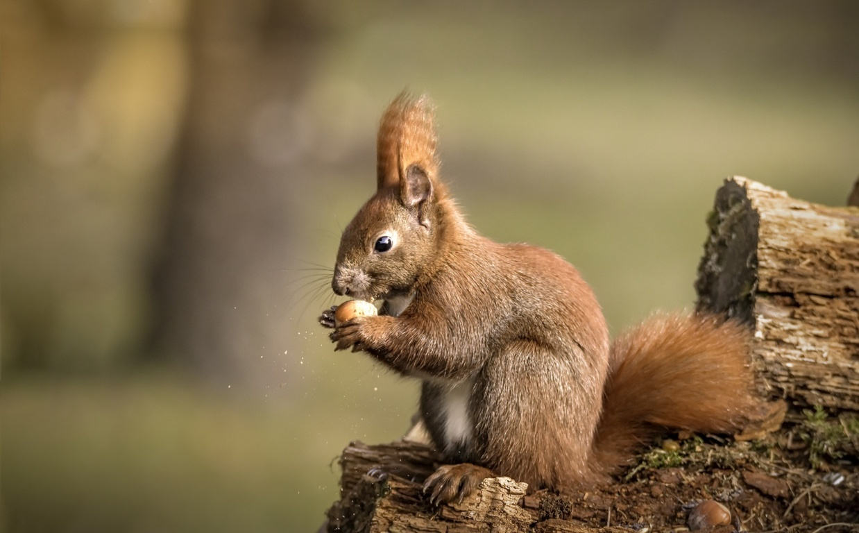 Squirrel iPhone HD Wallpaper