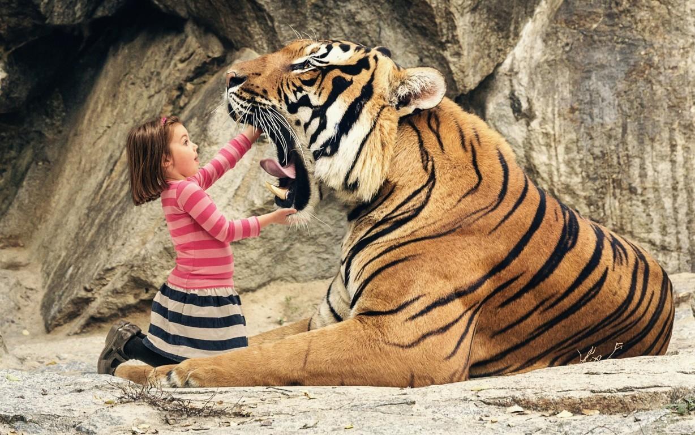 Top 70 Bengal Tiger Hd Animal Spot Wallpaper