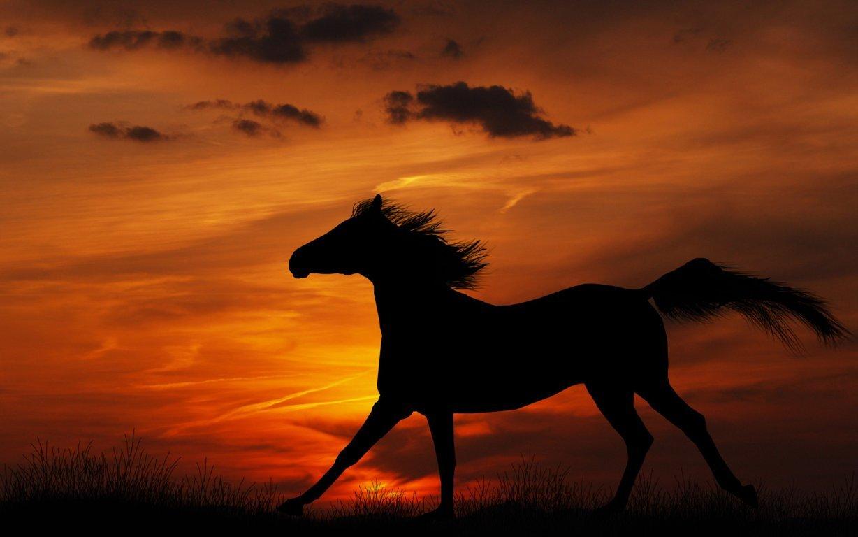 Ultra HD Horse Wallpaper 4K