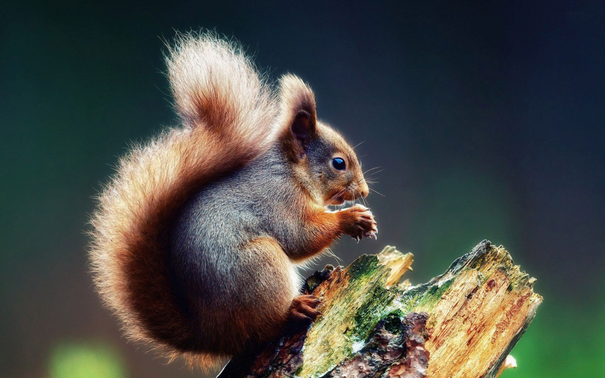 Wallpaper Blink Squirrel Wallpaper 9 For Android Hd