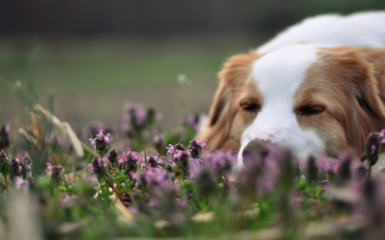 Wallpaper Look Face Moss The Border Collie Image Ultra Hd Dog