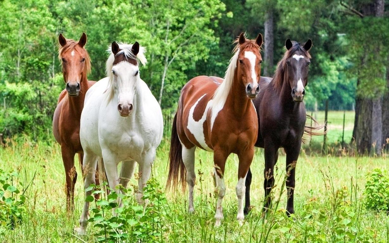 White Horse Wallpaper Download HD