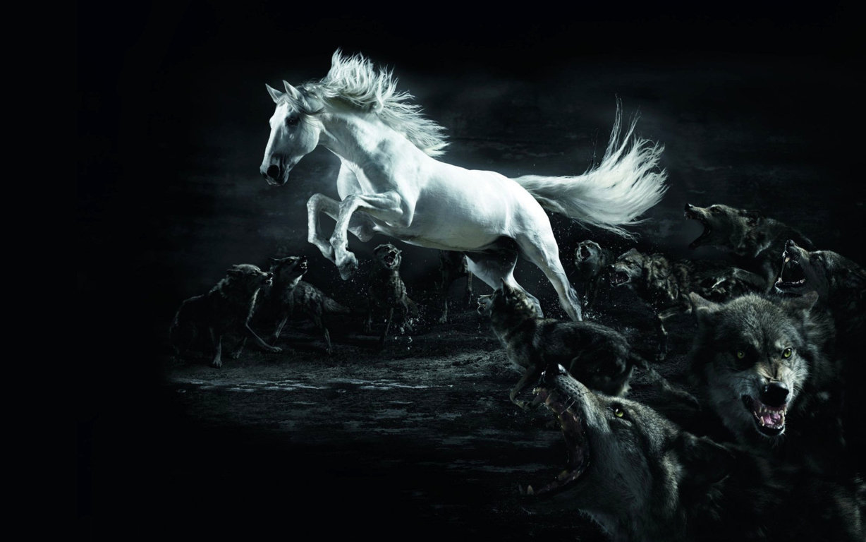 White Horse Wallpaper Download