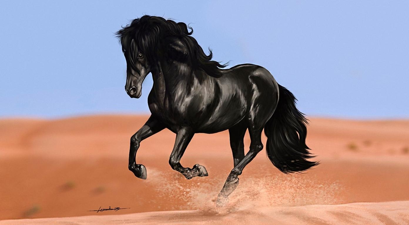 White Horses Hd Resolution 4k Hd