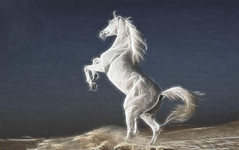 horses wallpaper White Horses HD Wallpaper Horses