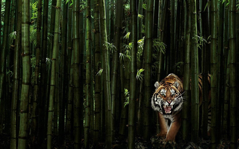 Baby Tiger Background For Wallpaper Desktop